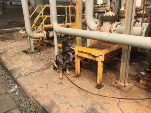 Leak detection with sniffing dogs